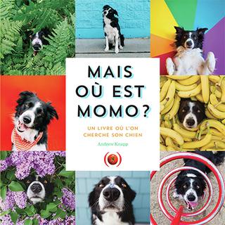Mais où est Momo ? | Knapp, Andrew. Auteur